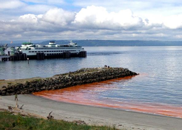 Red-orange noticula algae bloom in Edmonds, May 2013. Photo: Jeri Cusimano via WA Ecology (CC BY-NC 2.0) https://www.flickr.com/photos/ecologywa/8744775093