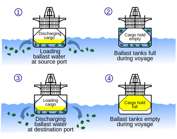 Diagram showing the water pollution of the seas from untreated ballast water discharges. By: Maxxl² (CC-BY-SA-3.0) https://commons.wikimedia.org/wiki/File%3ABallast_water_en.svg
