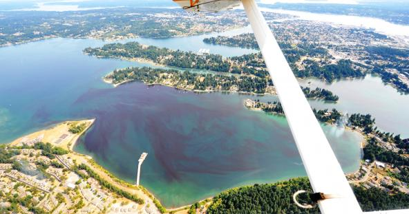 An algae bloom visible on the surface of Ostrich Bay in Bremerton, WA. August 28, 2017. Aerial Photo: Christopher Krembs, WA Ecology Eyes Over Puget Sound