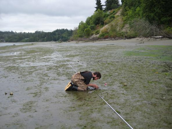 Bart Christiaen counting eelgrass shoot density at Dumas Bay. Photo: WA DNR Nearshore Habitat Program