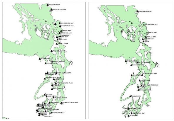 Historic distribution of Olympia oysters circa 1850 (left) and 19 current restoration sites (right) in Puget Sound. Maps: Brady Blake and Alex Bradbury/WDFW