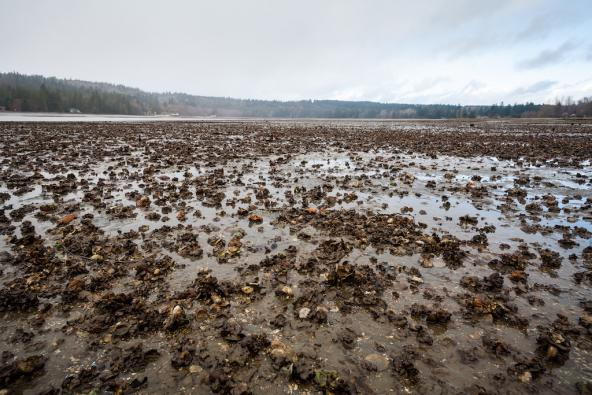 Low tide at North Bay on Case Inlet in Puget Sound. Photo: Benjamin Drummond/benjandsara.com