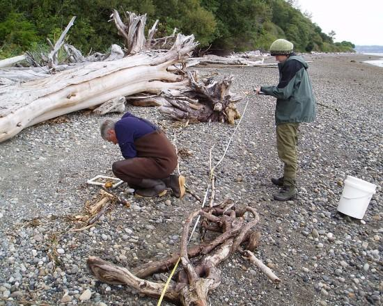 Jeff Cordell and Erin Morgan survey sea wrack on a Puget Sound beach. Photo: Megan Dethier