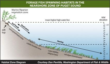 Habitat Zone Diagram. Graphic: Dan Penttila, WDFW