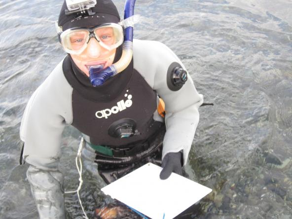 Sarah Heerhartz monitoring fish movements in snorkel gear. Photo: Jesse Colangelo-Lillis