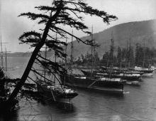 Cannery tenders in Chuckanut Bay, 1906. Photo source unknown.