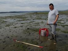 Swinomish Tribe bait clam harvest. Photo by Courtney Greiner.