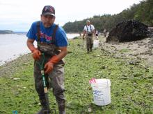 Tribal members digging for clams. Photo by Jim Gibson.