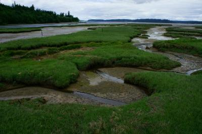 Tidal marsh at the Nisqually National Wildlife Refuge in Puget Sound. Photo courtesy of USFWS.