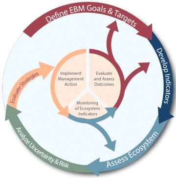 Graphic of the IEA loop. Credit: NOAA