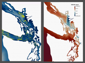 Maps generated from the Salish Sea Model showing surface layer transport in the Northwest Straits (left) and sea surface salinity (right). Images: Pacific Northwest National Laboratory