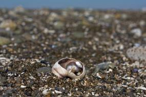 Fragile shell. Joe Doe (CC BY-NC-ND 2.0) https://www.flickr.com/photos/47104521@N08/4590994484/