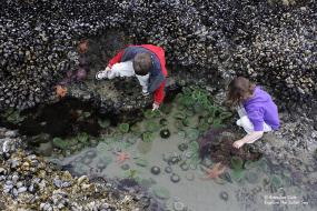 Photo by Brandon Cole. All rights reserved. Courtesy of Explore the Salish Sea: A Nature Guide for Kids.