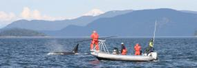Researchers led by veterinarian Pete Schroeder capture the breath of orcas in a search for pathogenic organisms from 2007 to 2009. // Photo courtesy of Pete Schroeder