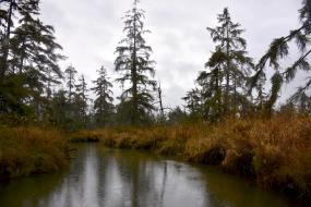 Tidal forest as viewed from an inner waterway of Otter Island in the Snohomish River estuary. Photo: Jeff Rice/PSI