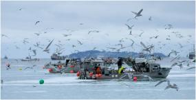 Herring fishing boats in the Strait of Georgia, BC
