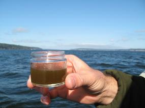 Phytoplankton collected in a jar carry toxic chemicals they picked up from Puget Sound. Photo: WDFW