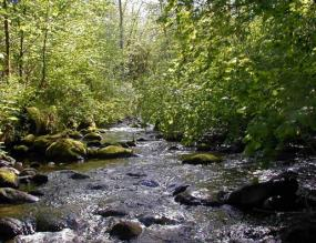 A section of Griffin Creek. Photo copyright King County.