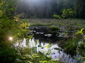 Freshwater habitat in King County. Photo by Jeff Rice. All rights reserved.