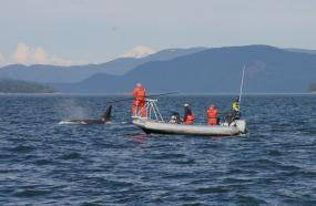 Scientists in a boat use a long pole to capture the breath of an orca. Photo: Pete Schroeder