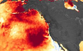 "Map showing a marine heat wave known as ""the blob"" which spread across the northeastern Pacific Ocean from 2014 to 2016. Image: Joshua Stevens/NASA Earth Observatory, Data: Coral Reef Watch"
