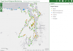 Eelgrass Data Viewer
