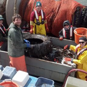 WDFW biologists sorting and measuring fish from PSEMP's index sites in the Duwamish River and near the Seattle Waterfront. Photo: WDFW