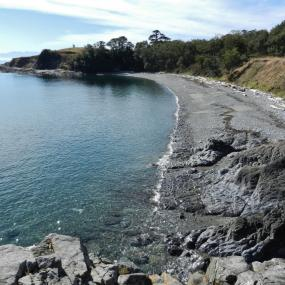 Cattle Point Beach, San Juan Island, WA. Photo: Travis S. (CC BY-NC 2.0) https://www.flickr.com/photos/baggis/8089171175