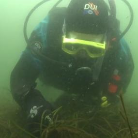 Herring spawn research in Puget Sound. Photo courtesy of NOAA