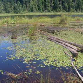 Moss Lake, part of a bog wetland complex in Moss Lake Natural Area. Photo by Jennifer Vanderhoof.