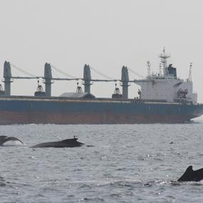 Noise from ocean-going ships can harm marine life. Photo courtesy of NOAA.