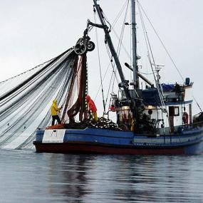 Block seine fishing. Image courtesy of WDFW.