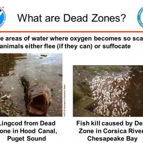 "Image describing low oxygen ""dead zones""; image courtesy of NOAA"