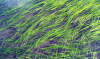 Eelgrass bed. Photo: NOAA