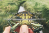 European green crab story map cover image