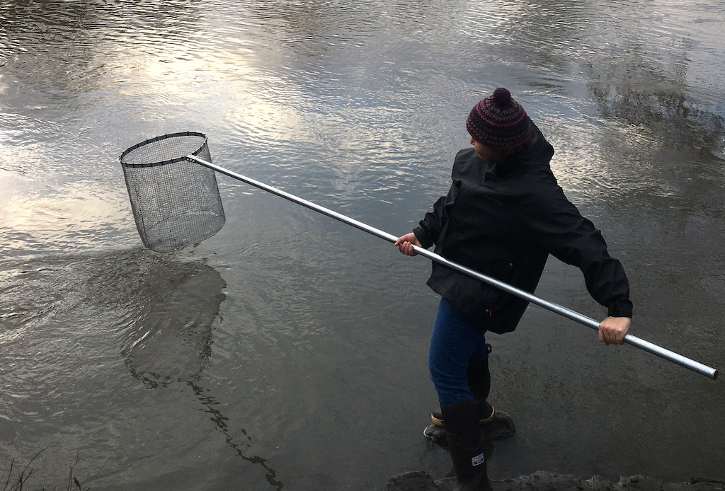 A woman standing on a rock in a river holding a long pole with a net on the end. Photo: Rachael Mallon