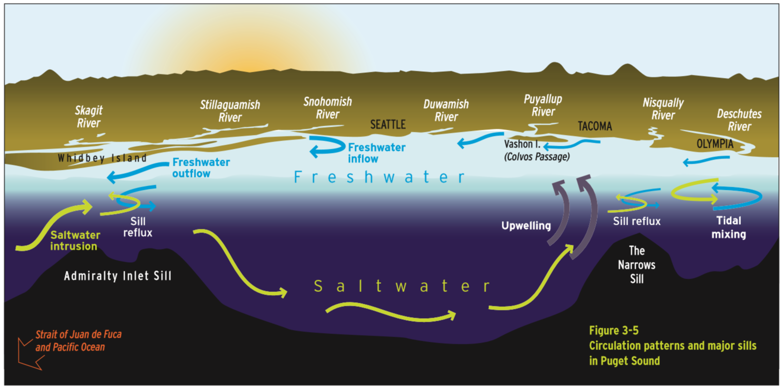 Water and nutrient circulation in Puget Sound | Encyclopedia