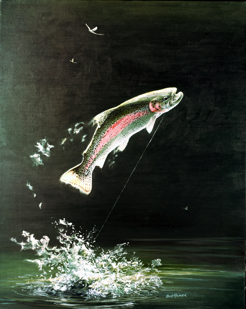 Freshwater fish jumping - Rainbow Trout Oncorhynchus Mykiss Image By Robert Hines Courtesy U S Fish And Wildlife Service